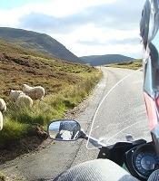 moto en ecosse sur une route avec des moutons