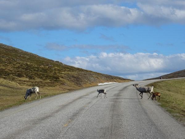 route du cap nord