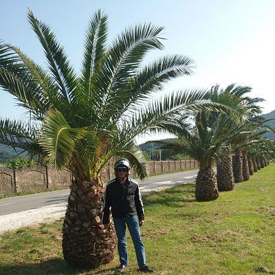 motard devant un palmier en Croatie